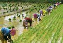 Астық нарығы Қытайда «нәзік тақырыпқа» айналды